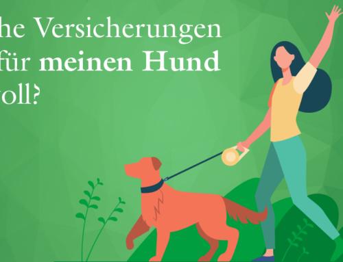 Welche Versicherung sind für meinen Hund sinnvoll?